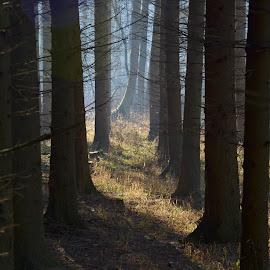 V lese by Maru Vykydalová - Nature Up Close Trees & Bushes ( shadow )