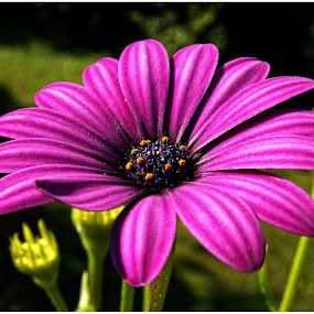 by Doreen L - Flowers Single Flower