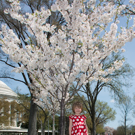 by Mg Photography - Babies & Children Toddlers ( fashion, model, joy, minnie mouse, daughter, intriguing, children, beauty, people, pretty, child, washington, pose, nature, joyfull, woman, family, perfect, flower, downtown, dc, cherry blossom festival, park, national, fun, families, posing, women, portrait, cherry tree, enjoyment, godess, female, dress, modeling, wife, outdoors, outdoor, washington dc, nations capital, stunning, outside,  )