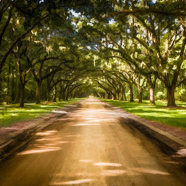 Wormsloe Art by Chris Thomas - Digital Art Places ( wormsloe, savannah, painterly, mottled, georgia, road, painting, infinity, ga, wormsley )