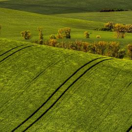 Wave by Darja Pavlacká - Landscapes Prairies, Meadows & Fields ( south moravia, czech )