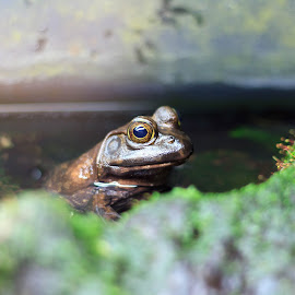by Alex Pozon - Animals Amphibians