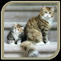 App Cute Cat apk for kindle fire