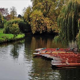 River Cam by Jake Mottram - Nature Up Close Water ( river cam, punts, cambridgeshire, cambridge, canoes, river )