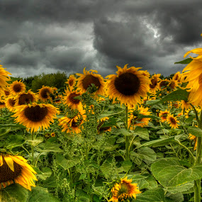 by Jon Harris - Nature Up Close Flowers - 2011-2013