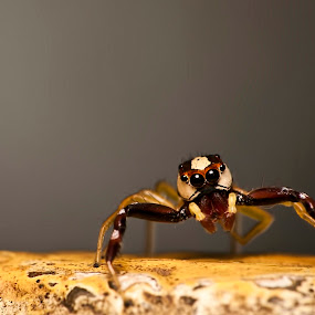 Wondering by Nadzli Azlan - Animals Insects & Spiders