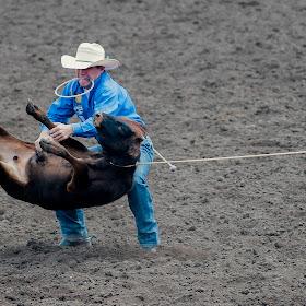 calf roping.jpg
