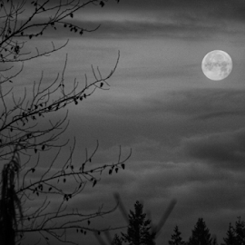 Super moon  by Todd Reynolds - Black & White Landscapes