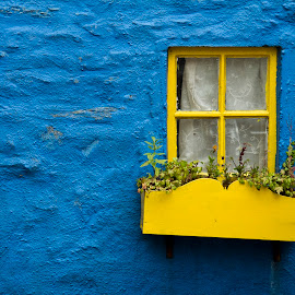 Blue Window by Alessandro Calzolaro - Buildings & Architecture Homes ( ireland, window, blue, house, yellow, wall )