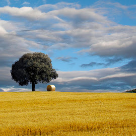 The Tree II by Fed  ® - Landscapes Prairies, Meadows & Fields ( field, skyline, sky, tree, horizontal, foliage, no person, hay, baler, gold, landscape, profile,  )