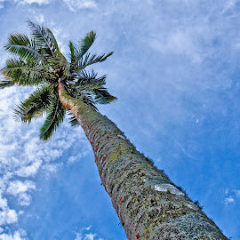 Palm @ Champagne Beach by Damien Watson - Nature Up Close Trees & Bushes ( palm, vanuatu, espiritu santo, pacific, beach, paradise )