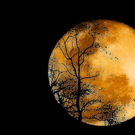 Moonrise Queensland. by Dave  Horne - Landscapes Sunsets & Sunrises