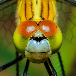 1 2 3 smile~ by KC Soo - Animals Insects & Spiders