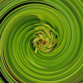 buds swirled by Debbie Theobald - Abstract Patterns ( edited, abstract, swirl, plants, buds,  )