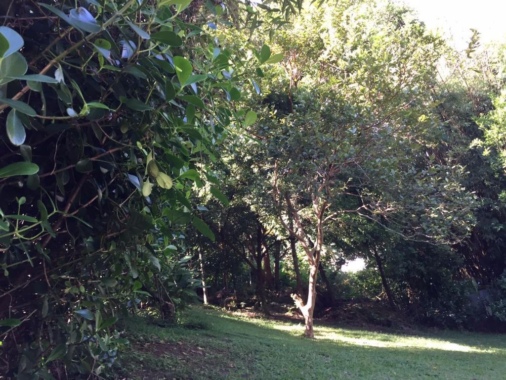 Terreno, Itacorubi, Florianópolis (TE0267) - Foto 12