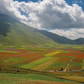 Division Plan by Mauro Fini - Landscapes Prairies, Meadows & Fields ( flowering, national park of sibillini mountains, castelluccio di norcia )