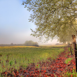 Dew fields by Pedro Silva - Landscapes Prairies, Meadows & Fields ( dew, pedrosilvaimages, morning, spring, 5dmkiii, field, foggy, leafs, fog, autumn, trees, sunrise, portugal, pedro silva )