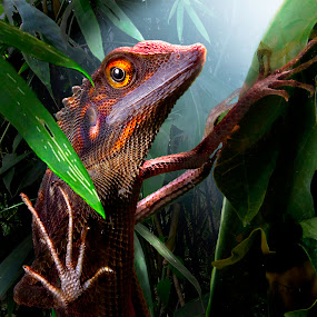 Chameleon by Jun Santos - Animals Reptiles ( lights, foliage, brown, surprise, chameleon )