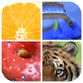 Game Guess The Word : Close Up Picture APK for Kindle