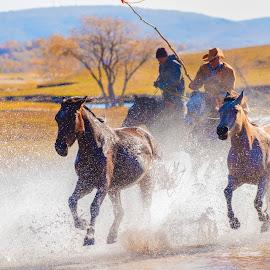 by 善 向 - Animals Horses