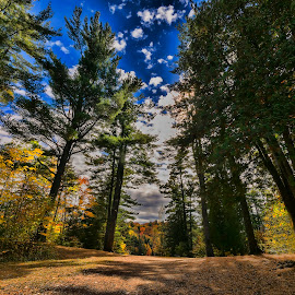 Automn by Daniel Thomas - Landscapes Forests ( nature, fall colors, trees, forest, automn )
