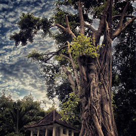 Maerokoco  by Ghamhatronich Ghamhatronich - Landscapes Forests ( clouds, homeopathic, land, forest, landscape )