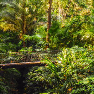 the bridge in the lush forest.jpg