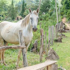 Cavalo by Roberto Bessa - Animals Horses ( fazenda, interior, cavalo, horse, vida no campo, sítio )