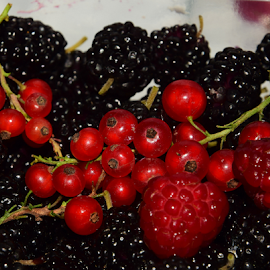 red with black by LADOCKi Elvira - Food & Drink Fruits & Vegetables