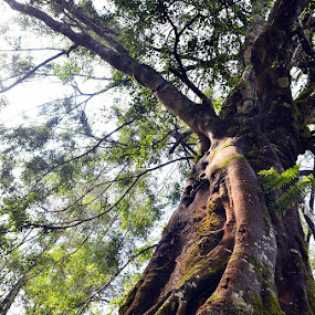 the trees by Gunarsa Gunarsa - Nature Up Close Trees & Bushes ( tree, aep gunarsa, pohon, gunung puntang )