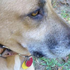 by Barbara Boyte - Animals - Dogs Portraits