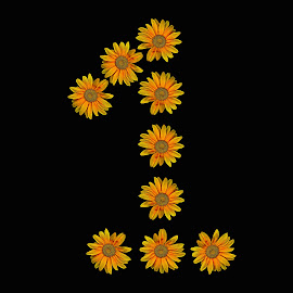 Sunflowers by Abbey Gatto - Typography Single Letters ( 1, sunflower, typography, number one, single letter )