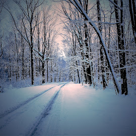 Winter blast by Sue Delia - Landscapes Travel ( snow, road, storm,  )