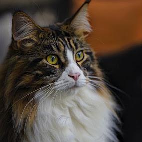 by Mark Luftig - Animals - Cats Kittens (  )