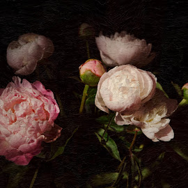 Peonies by Anita Meis - Digital Art Things ( peonies, rembrandt, flowers, light, contrast, dark, still life, bouquet )