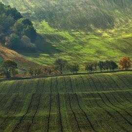 by Josef Hasík - Landscapes Prairies, Meadows & Fields ( green, krajina )