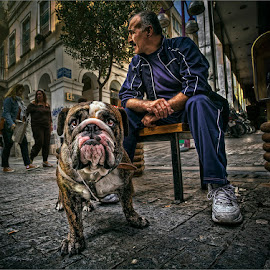 man and his dog by Dries Fourie - City,  Street & Park  Street Scenes
