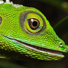 by Azmand Rosland - Animals Reptiles