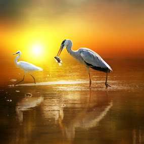 A Catch in the Mist by Alit  Apriyana - Animals Birds