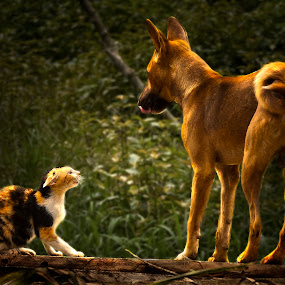 Cat Not Intimidated by Big Dog by Jun Santos - Animals Other Mammals ( cat, fighting, dog, animal, pwc84 )