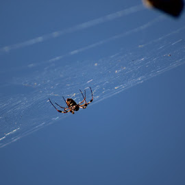 Hanging around  by Claudia Bankson Burge - Nature Up Close Webs