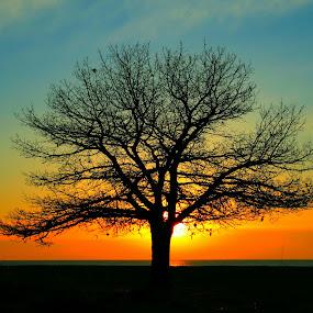 Serenity by Nancy Tonkin - Nature Up Close Trees & Bushes ( orange, sky, tree, bright, blue, yellow,  )