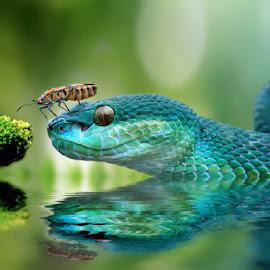 by Yan Hidayat  - Digital Art Animals