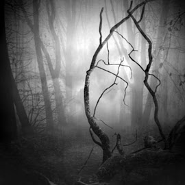 Floresta by Sill Scaroni - Landscapes Forests ( black and white )