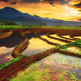 by Rahmad Himawan - Landscapes Prairies, Meadows & Fields ( field, reflection, nature, sunset, sunshine, sunrise, landscapes )