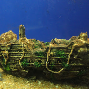 boat in a aquarium  by Sarath Goparaju - City,  Street & Park  Amusement Parks ( canon, fish, aquarium, street, photography )