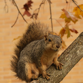 Aww, nothing for me? by Darlene Neisess - Animals Other ( nature, tree, squirrels, furry, squirrel )