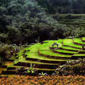 Green Terracing by Ag Adibudojo - Landscapes Travel ( square )