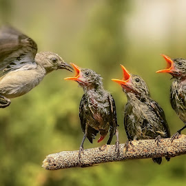 Keep Calm and Wait For Your Turn by MazLoy Husada - Animals Birds