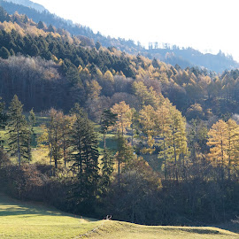 Maienfeld - Malans, Graubünden, Switzerland by Serguei Ouklonski - Landscapes Forests ( countryside, mountain, wood, tranquil scene, no person, travel, nature landscape, sky, tree, nature, autumn, weather, light, grassland, hill, conifer, grass, horizon, atmosphere, tourism, beauty in nature, graubunden, sunlight, rural, country, environment, season, outdoors, scene, tranquility, day, outside, land, valley, landscape, sun, clear, farm, sunny, no people, cloudy, switzerland, water, clouds, scenics, cloudscape, scenic, field, fog, outdoor, fall, cloud, scenery, daylight, growth )
